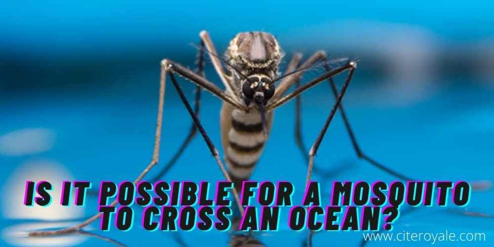 Is it possible for a mosquito to cross an ocean