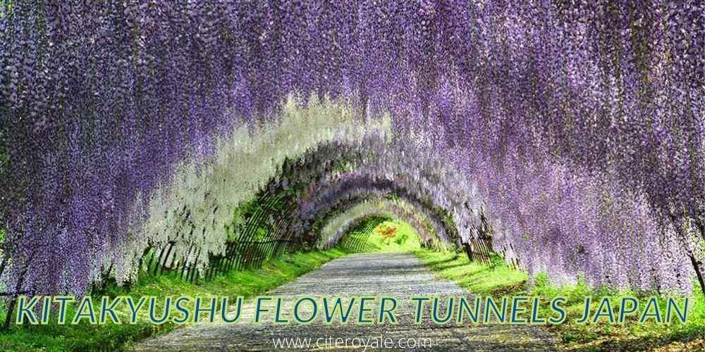 Kitakyushu flower tunnels Japan