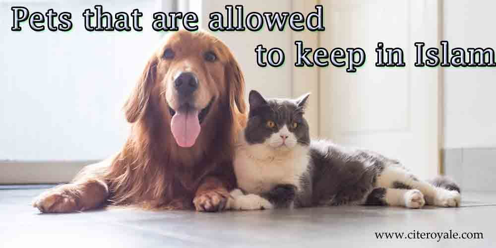 What pets can a Muslim keep?
