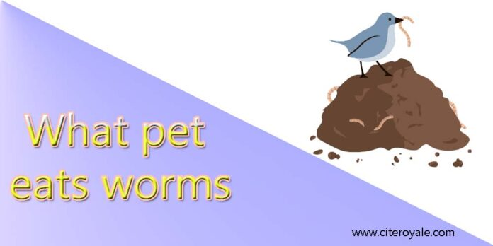 What pet eats worms