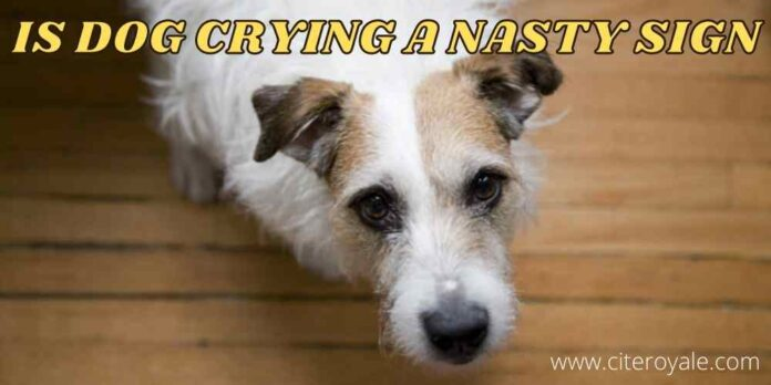 IS DOG CRYING a nasty SIGN